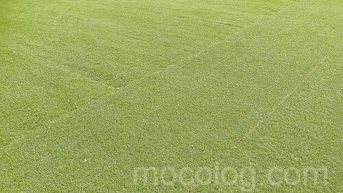 庭の防草シート+人工芝の様子