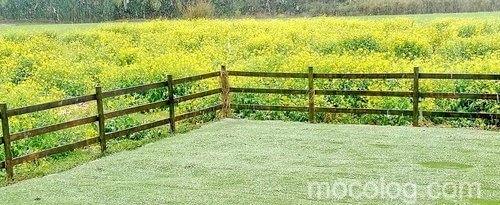 雑草が生えない庭